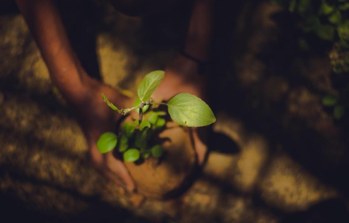 retribui a natureza planta arvores conselho das pja