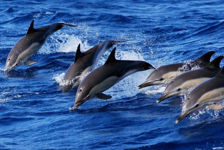 Observação de baleias e golfinhos - meio dia